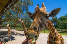 The Orlando Animals Attractions