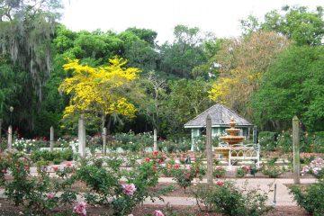 Leu Gardens Orlando | Explore Orlando Gardens